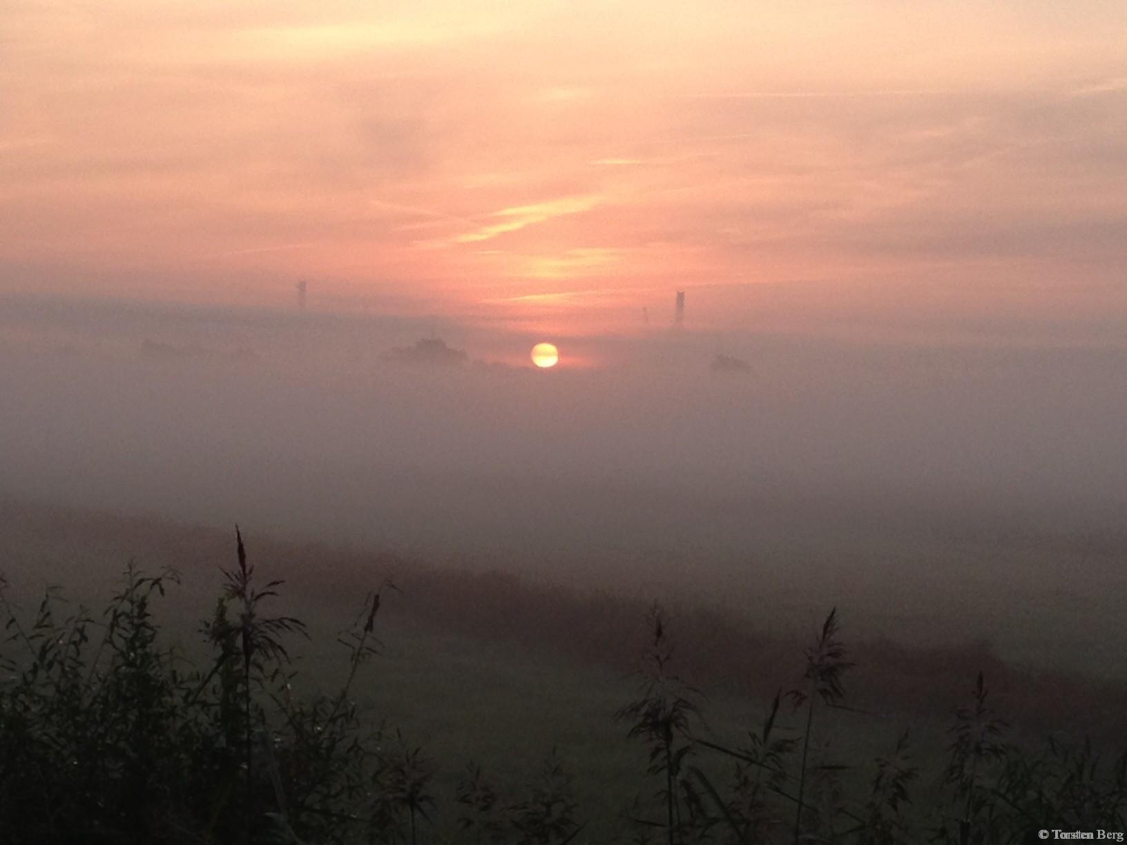 Wenn Nebelschwaden über Wiesen wabern