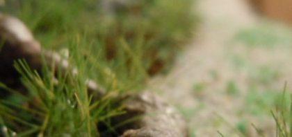 Beiträge zur Geschichte: Waldesruh und die Harzschützen