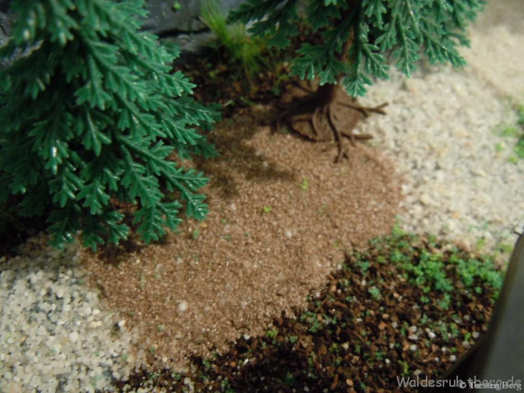 Ausstattung: Busch 6043 Wiese & Wald Bodengestaltung