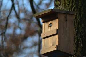 Staatlich gefördertes Wohnungsbauprogramm für Singvögel – Nistkastenprojekt des NABU