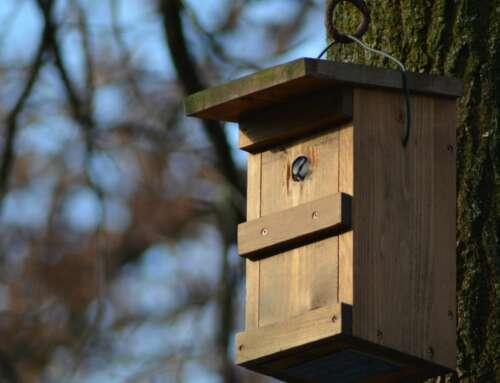 Staatlich gefördertes Wohnungsbauprogramm für Singvögel – Nistkastenprojekt vom NABU Bremen