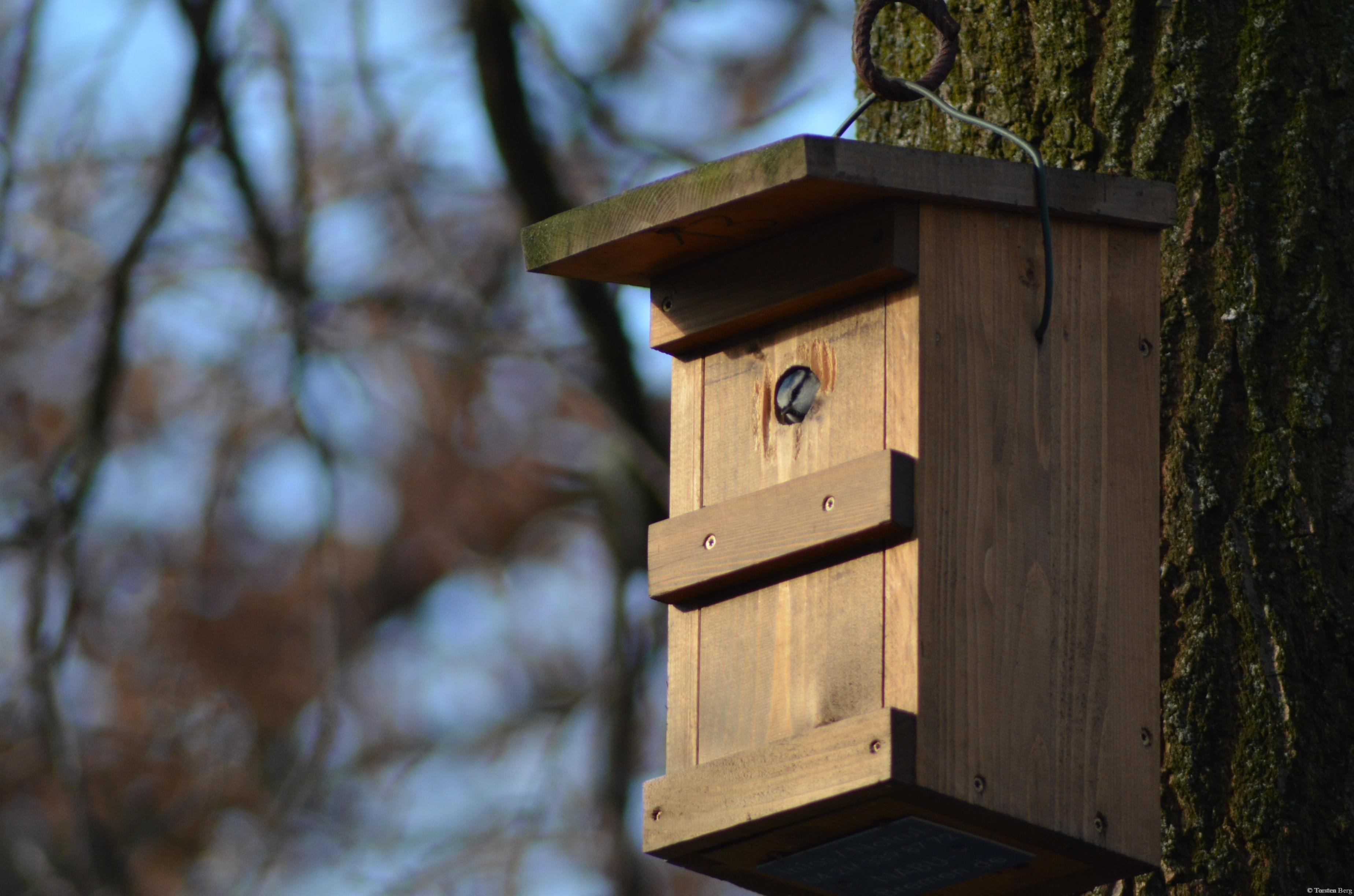 Staatlich gefördertes Wohnungsbauprogramm für Singvögel - Nistkastenprojekt des NABU