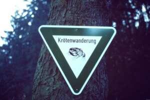 Verkehrszeichen Krötenwanderung