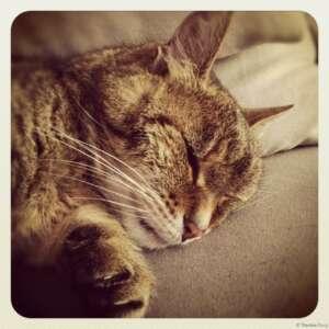 Kitty-King 10.jpg