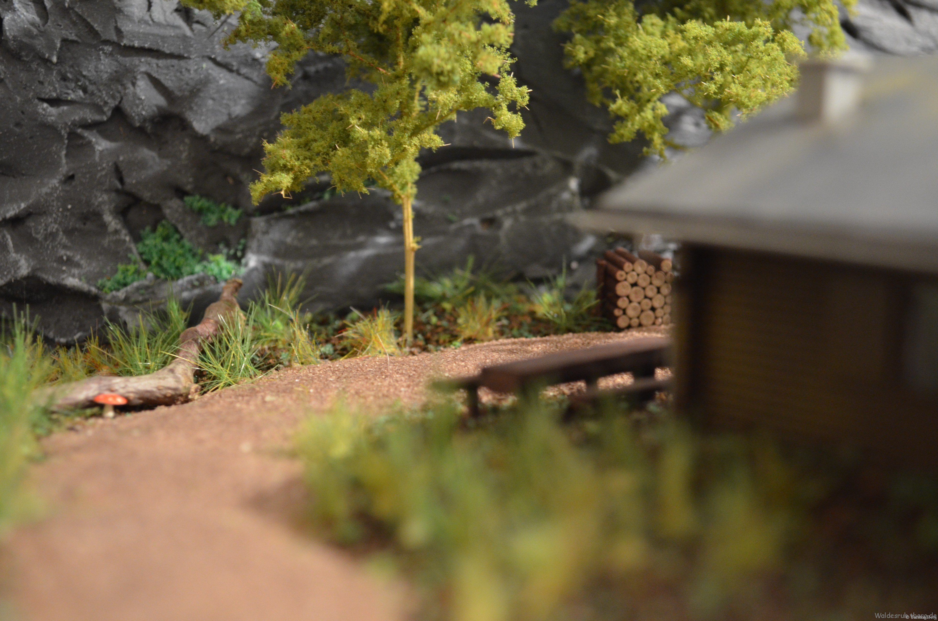 Pilzsaison in Waldesruh