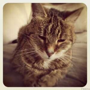 Kitty-King 3