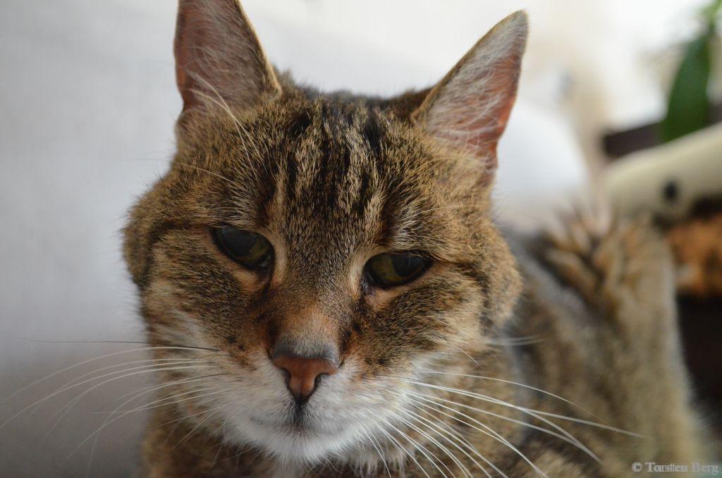 Für Kitty - einem der besten und treuesten Freunde! Ein Nachruf
