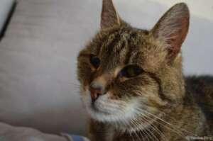 Für Kitty – einem der besten und treuesten Freunde!