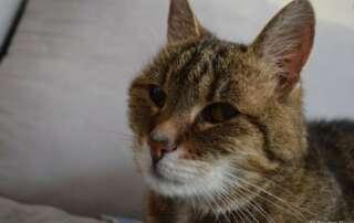 Für Kitty - einem der besten und treuesten Freunde!