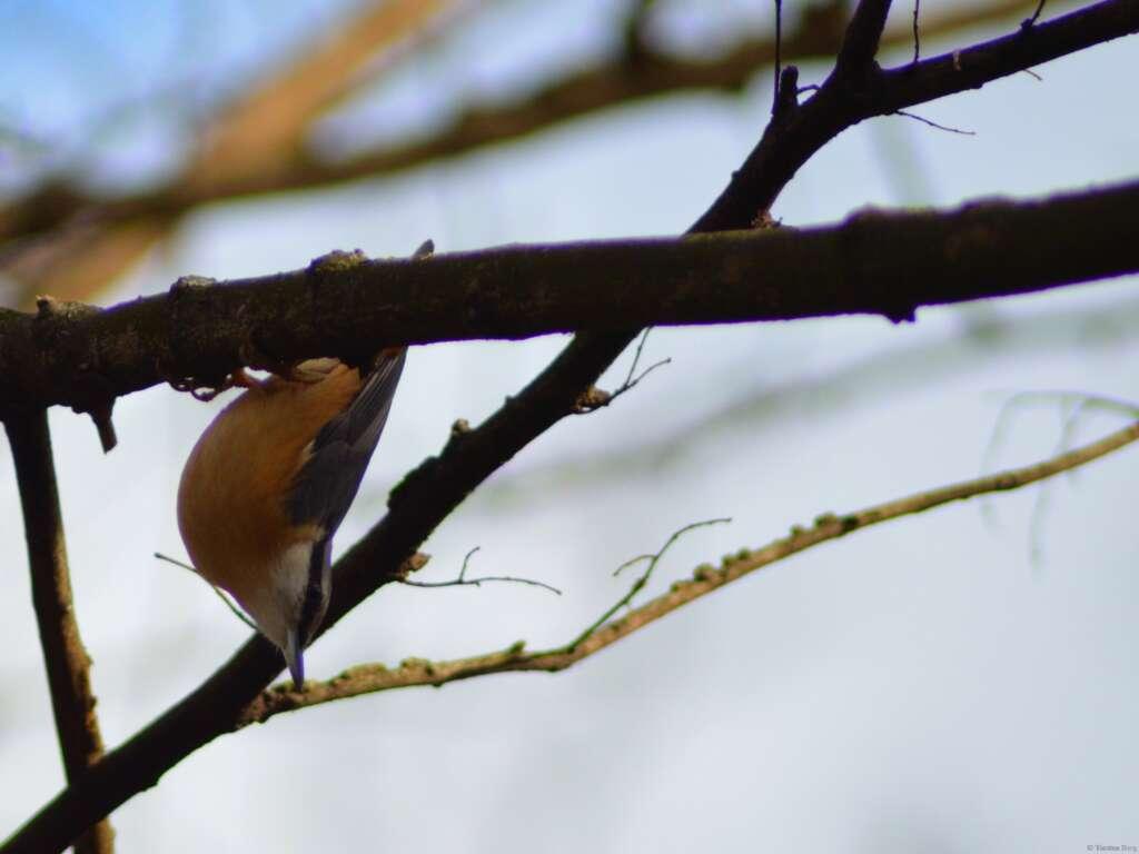 Mitmachen bei der Stunde der Wintervögel