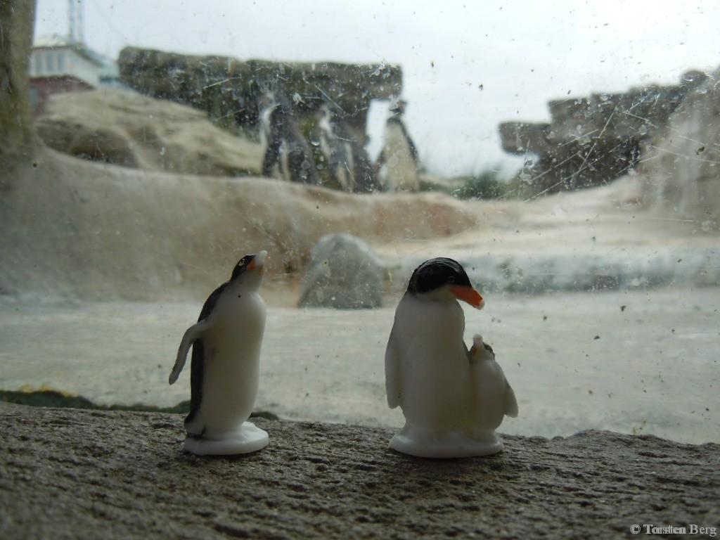 Die Tiere des VEB Plaho - Pinguingruppe