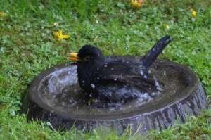 Vogeltränke als Service für unsere Gartenvögel