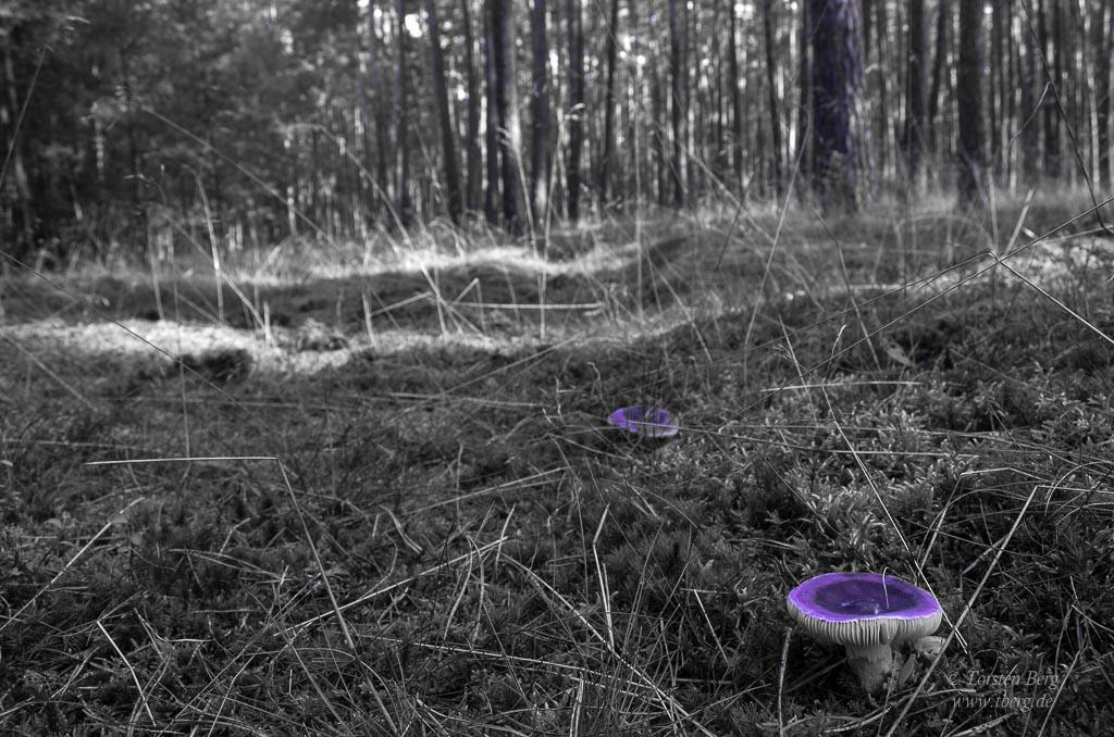 Herbstzeit - Zeit zum Pilze sammeln und fotografieren mit Tipps - selektive Farbe im Foto