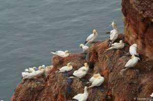 Plastikmüll auf dem Lummenfelsen von Helgoland