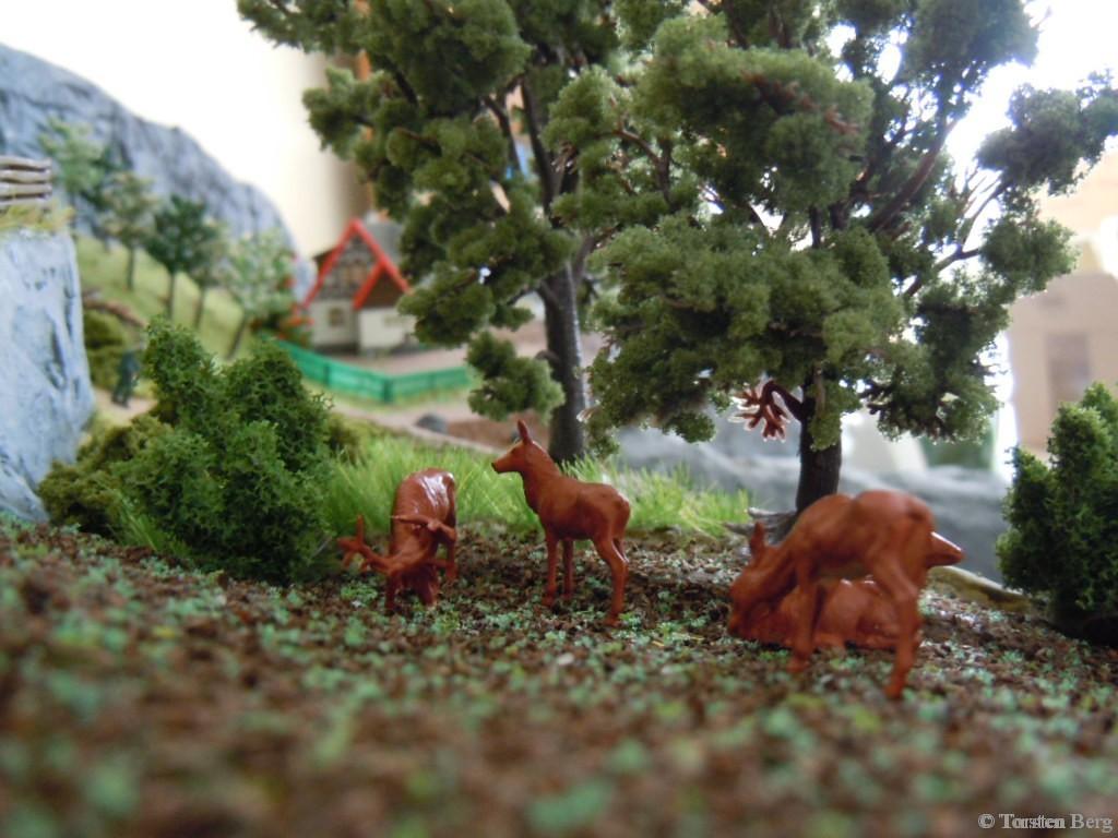 Förster Grünrock erzählt: rivalisierende Hirsche