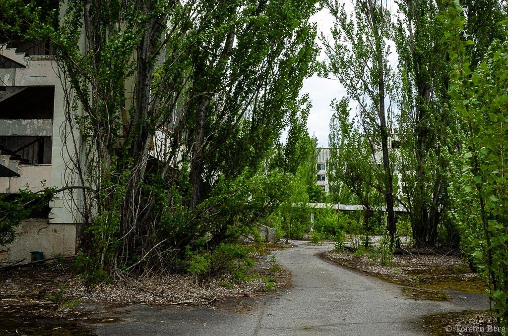 Tschernobylzone 3. Teil: von Biorobotern und Spechten