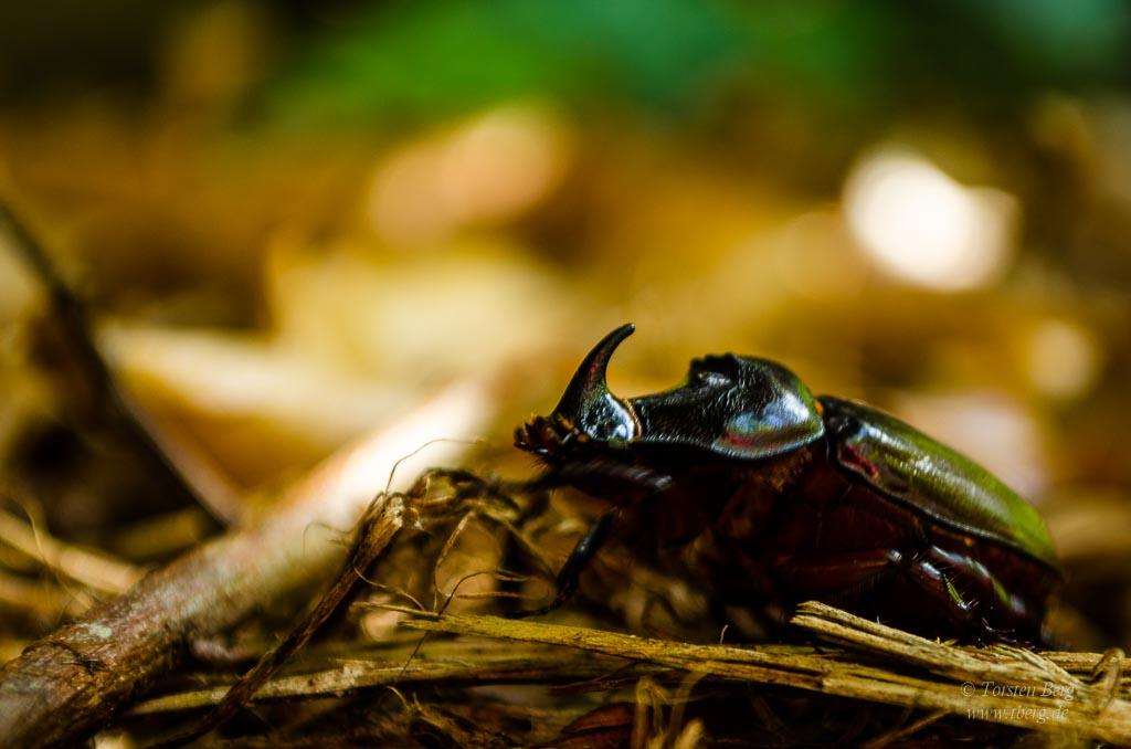 Tag des Artenschutzes sollte an jedem Tag sein!