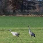 Unterwegs im Biosphärenreservat Niedersächsische Elbtalaue
