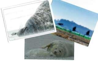10 Gründe, warum du wieder einmal eine Postkarte versenden solltest