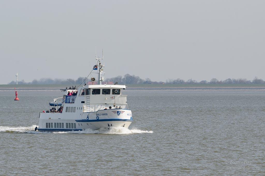 Die Schweinswale in Wilhelmshaven