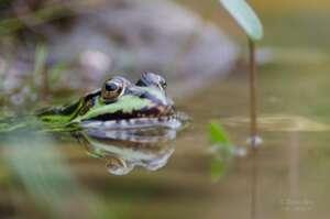 #6 Fighting Extinction – Kampf gegen das Aussterben