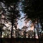 Unterwegs im Urwald Hasbruch