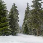 Zum Brocken im Winter unterwegs im Harz