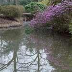 Ausflugtipp: Rhododendronpark Bremen mit Botanischem Garten und Botanika