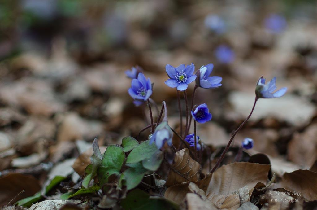Aprilnachlese und Maiausblick