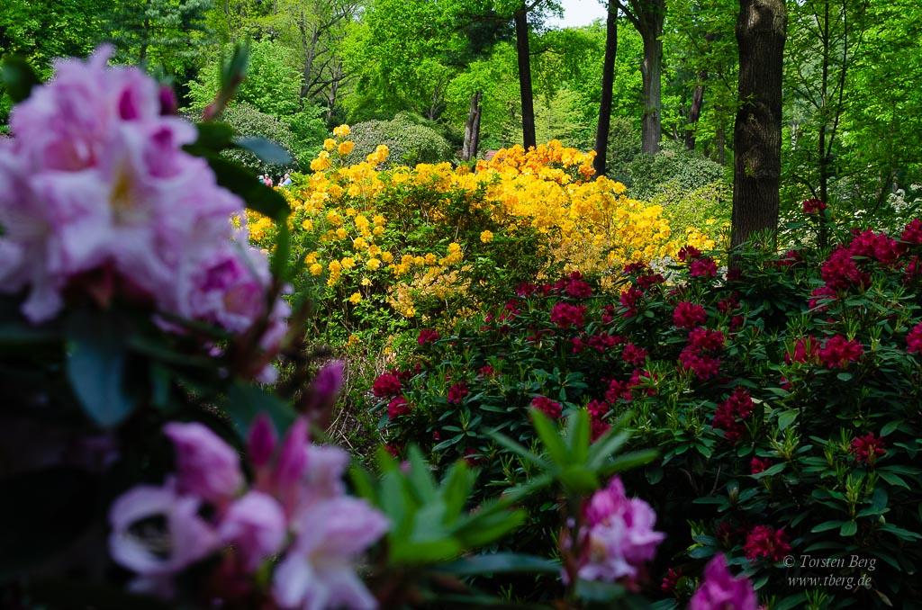 Der Park zur Rhododendron- und Azaleenblüte mit wunderschönen Sichtachsen