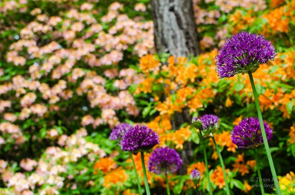 Gedanken im Mai 2020 - Farben, Formen und Linien im Rhododendronpark Bremen