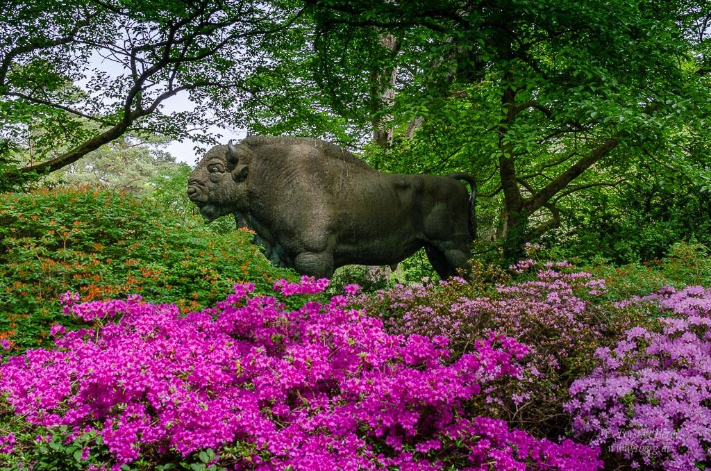 Rhododendronpark Bremen mit Botanischem Garten