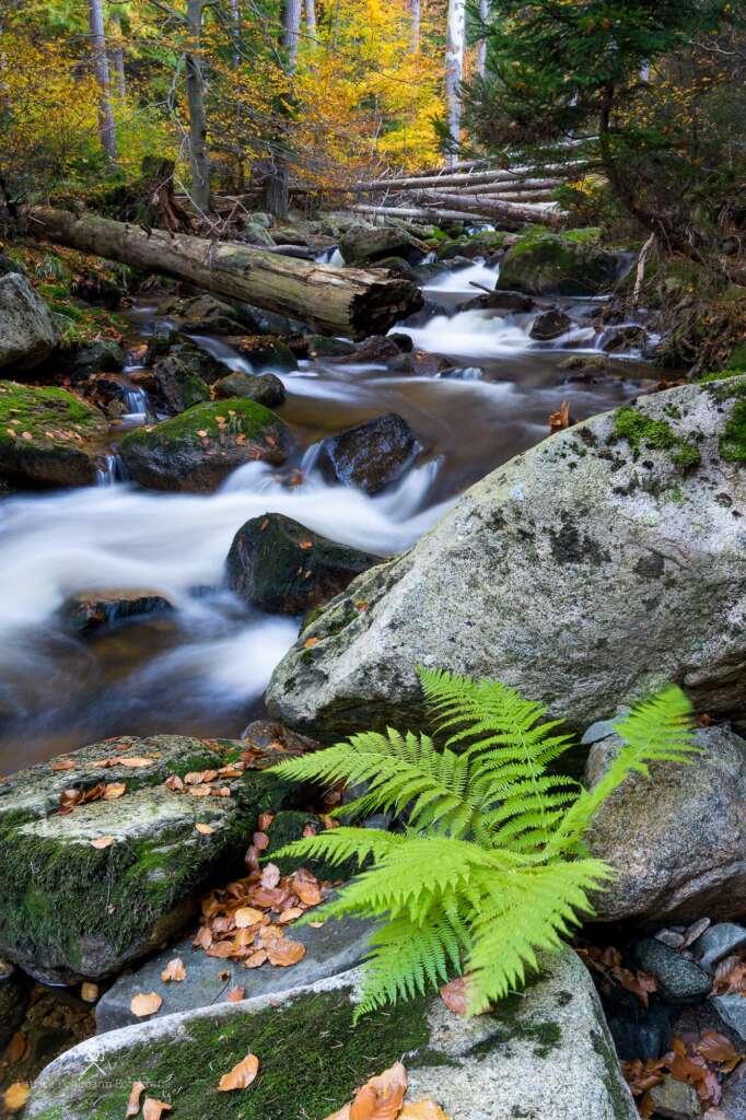 #Blogger4Natur: Patrick Pohlmann von Reise- und Naturfotografie
