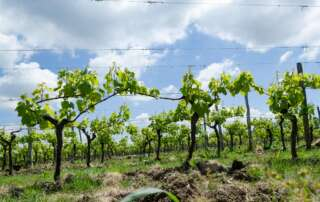 Unterwegs im Bordeaux: Chateau de Monbazillac, Issigeac und Bergerac