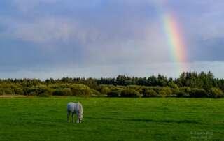Fotoparade 2019: meine kleine Reise durch das Fotojahr das Regenbogenpferd