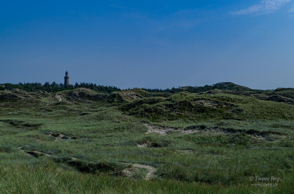 Nationalpark Thy in Dänemark - Dünenheide beim Leuchtturm in Lodbjerg