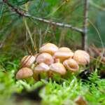 Herbstzeit zum Pilze fotografieren und sammeln mit Tipps