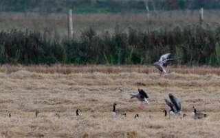 Faszinierende Vogelbeobachtungen beim Vogelzug