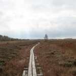 Wanderung im Neustädter Moor (Wagenfeld-Ströhen)
