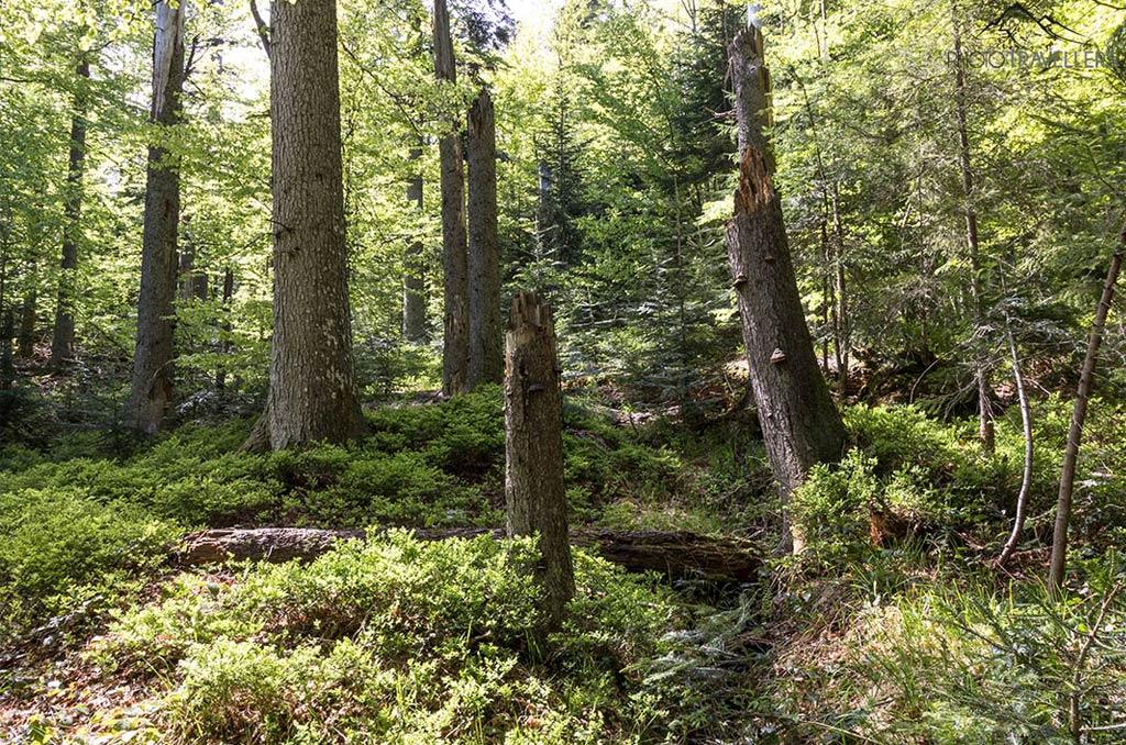 Nationalparks in Deutschland - 16 Blogger geben mir ihre Tipps! Nationalpark Bayrischer Wald
