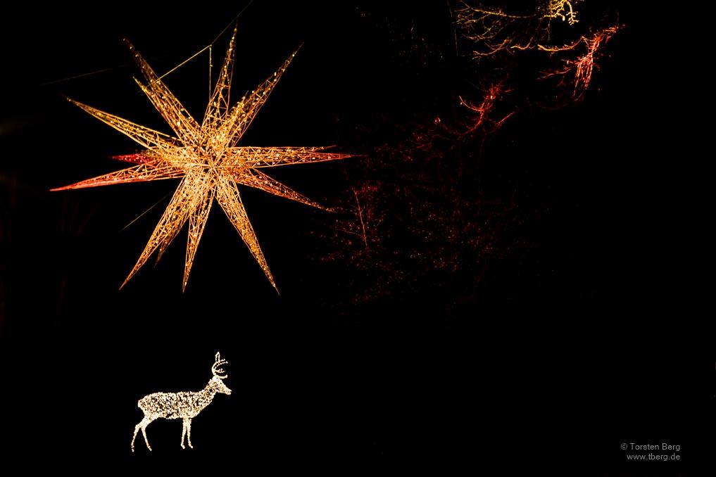 Gedanken im Dezember 2020: Weihnachten im LockDown - weihnachtliche Illumination in den Bremer Wallanlagen