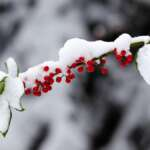 Fotografieren im Schnee - hilfreiche Tipps zu Einstellungen und Equipment
