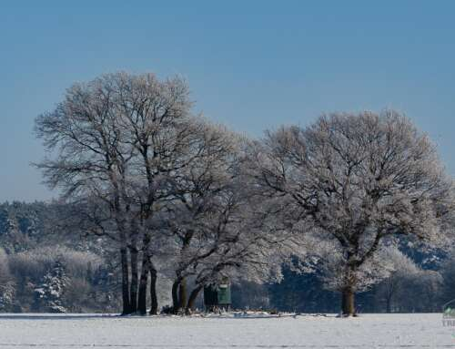 Fotografieren im Schnee – hilfreiche Tipps zu Einstellungen und Equipment