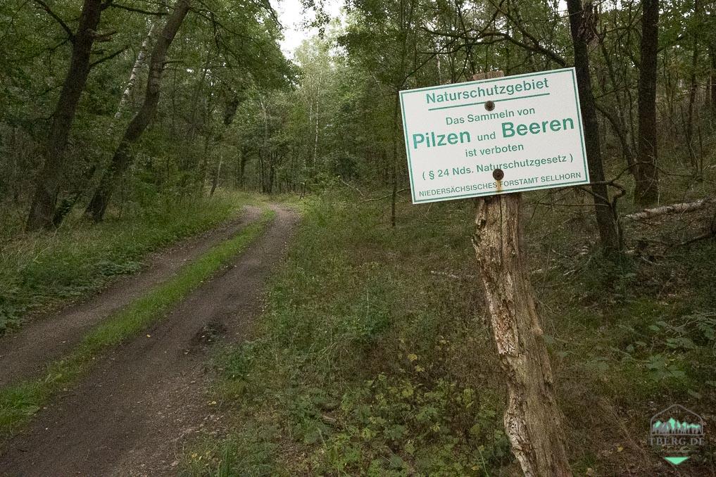 Tipps und Wissenswertes für einen Waldbesuch - Pilze und Beeren sammeln erlaubt?