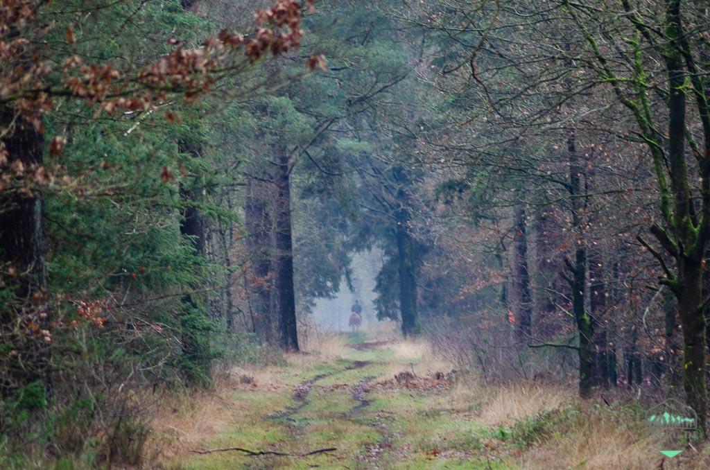 NORDPFADE - willkommen im Flachwanderland bei Bremen Wanderwege durch Wald, Moor und Heide