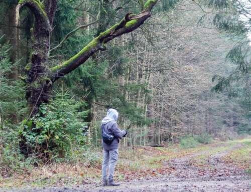 Tipps und Wissenswertes für einen Waldbesuch