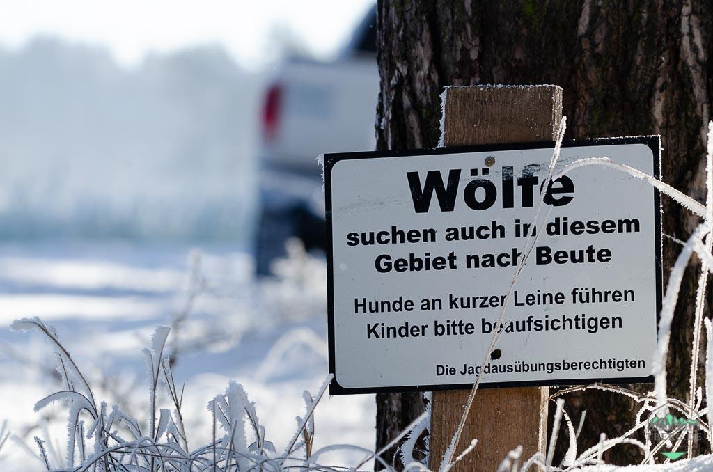 Tipps und Wissenswertes für einen Waldbesuch - Wölfe können auch gefährlich werden
