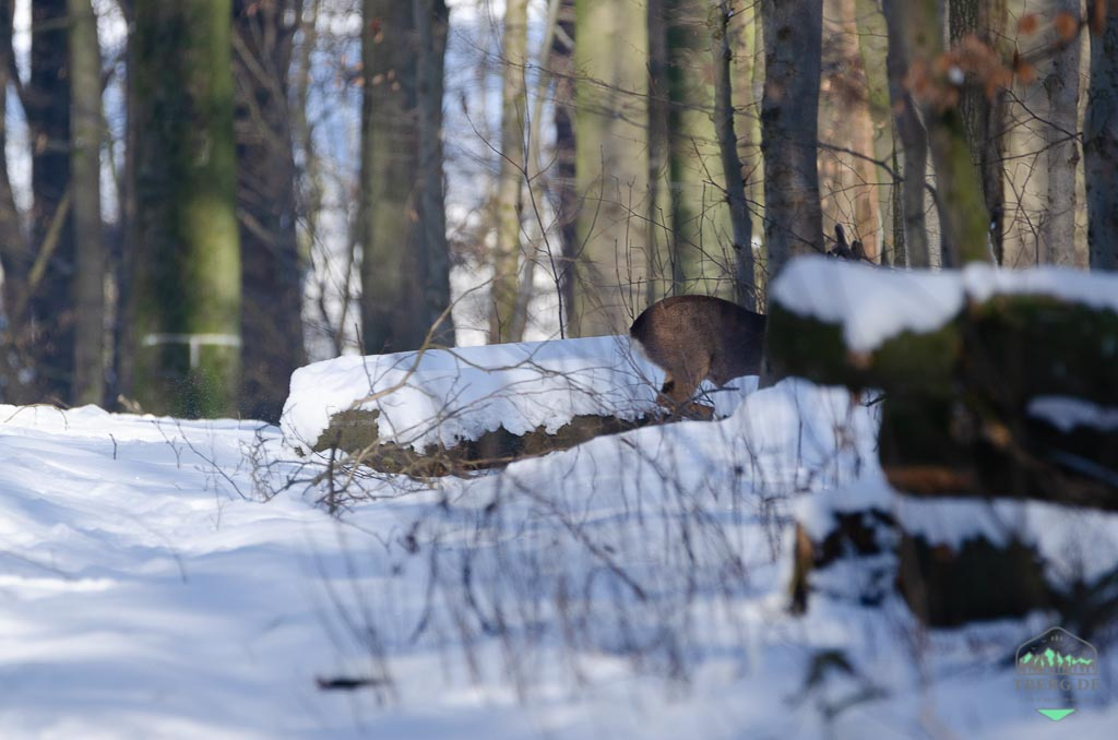 Tipps und Wissenswertes für einen Waldbesuch - wer aufmerksam im Wald unterwegs ist, bekomtm oft mehr als nur ein Hinterteil zu sehen