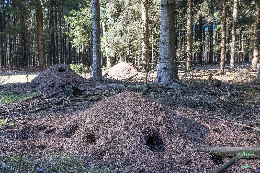 Rezension Fährten lesen und Spuren suchen - wer hat diese Löcher im Ameisenhaufen hinterlassen?