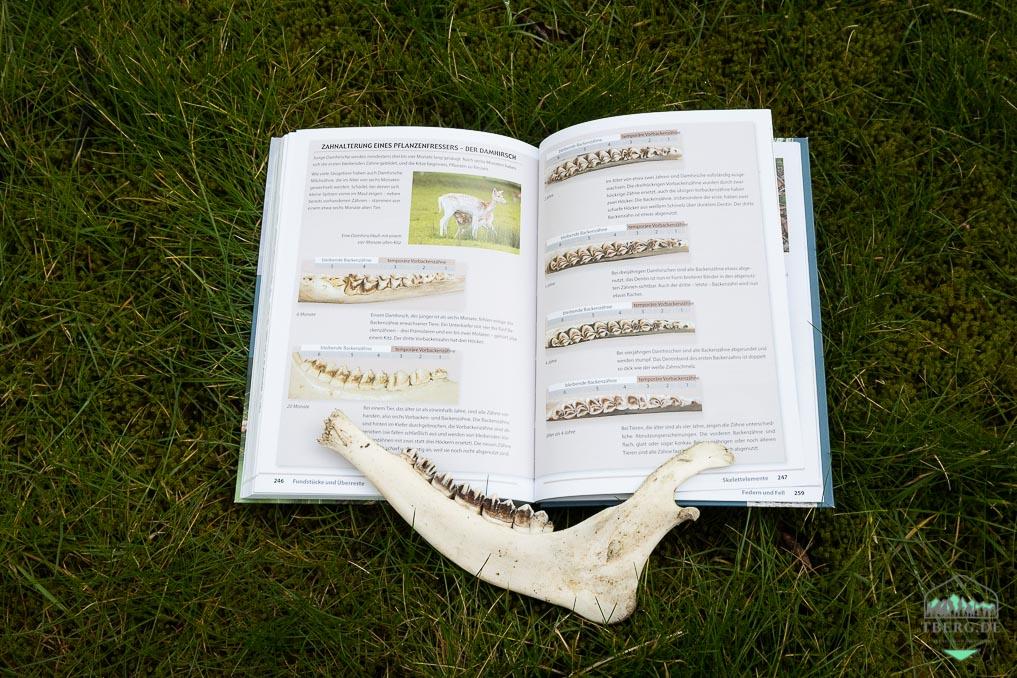 Rezension Fährten lesen und Spuren suchen - detaillierte Übersicht zur Zahnalterung eines Pflanzenfressers